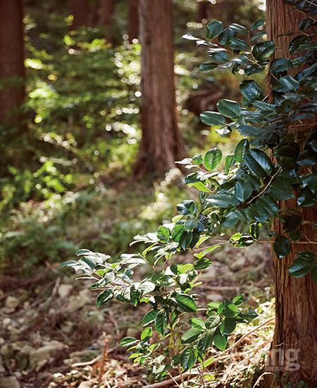 바테의 숲은 인위적으로 심고 가꾼 것이 아니다. 새가 씨앗을 물어오기도 하고 바람에 씨앗들이 날아오기도 하면서 나무들과 꽃, 풀들이 각자 터를 잡았다.